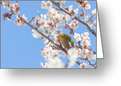 The Cape Greeting Cards - Japanese White-eye At Which It Looks Greeting Card by Yuji Takahashi