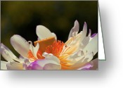 "\""aimelle Photography\\\"" Greeting Cards - Japenese Jewel Greeting Card by Aimelle"
