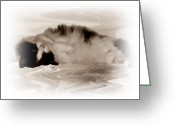 Kittens Digital Art Greeting Cards - Jasmine Greeting Card by Sharon Lisa Clarke
