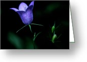 Sub Greeting Cards - Jasper - Common Harebell 2 Greeting Card by Terry Elniski