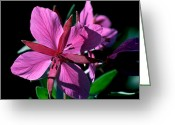 Cream Flowers Greeting Cards - Jasper - Dwarf Fireweed 1 Greeting Card by Terry Elniski