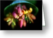 Cream Flowers Greeting Cards - Jasper - Limber Honeysuckle Greeting Card by Terry Elniski