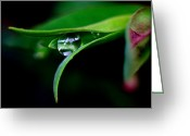Sub Greeting Cards - Jasper - Rain Drop Plant Greeting Card by Terry Elniski