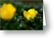 Sub Greeting Cards - Jasper - Snow Cinquefoil 2 Greeting Card by Terry Elniski