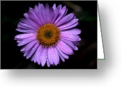 Sub Greeting Cards - Jasper - Subalpine Fleabane 1 Greeting Card by Terry Elniski