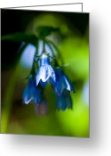Sub Greeting Cards - Jasper - Tall Bluebells Greeting Card by Terry Elniski