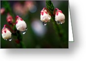 Sub Greeting Cards - Jasper - Western Moss Heather Greeting Card by Terry Elniski