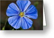 Sub Greeting Cards - Jasper - Wild Blue Flax Greeting Card by Terry Elniski