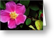 Sub Greeting Cards - Jasper - Wild Rose 1 Greeting Card by Terry Elniski