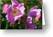 Sub Greeting Cards - Jasper - Wild Rose 2 Greeting Card by Terry Elniski