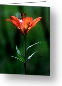 Sub Greeting Cards - Jasper - Wood Lily 1 Greeting Card by Terry Elniski