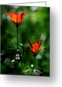 Sub Greeting Cards - Jasper - Wood Lily 2 Greeting Card by Terry Elniski