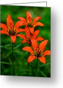 Sub Greeting Cards - Jasper - Wood Lily 3 Greeting Card by Terry Elniski