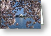 Washington D.c. Tapestries Textiles Greeting Cards - Jefferson Memorial on the Tidal Basin DS051 Greeting Card by Gerry Gantt
