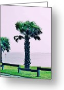Cabbage Palm Trees Greeting Cards - Jensen Causeway with Cross Processing Greeting Card by Don Youngclaus