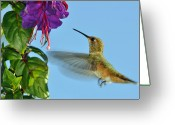 Oregon Greeting Cards - Jeweled Rufous in Afternoon Light Greeting Card by Laura Mountainspring