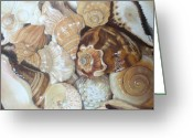 Seashell Art Greeting Cards - Jewels of the Sea Greeting Card by Joanne Grant