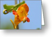 Wildflower Photography Greeting Cards - Jewelweed Open Door  Greeting Card by Neal  Eslinger