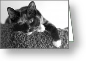 Portraits Photo Greeting Cards - Jocko Greeting Card by Lisa  Phillips