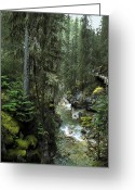 Johnston Greeting Cards - Johnston Canyon 2 - Canadian Rockies Greeting Card by Daniel Hagerman