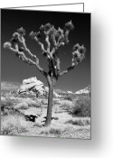 Mojave Greeting Cards - Joshua Tree in Monochrome Greeting Card by Adam Pender