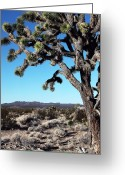Mojave Greeting Cards - Joshua Tree Greeting Card by John Rizzuto