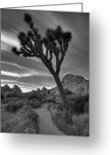 Paths Greeting Cards - Joshua Tree Path Greeting Card by Peter Tellone