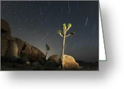 Tree Photo Greeting Cards - Joshua Tree Star Trails Greeting Card by Dung Ma