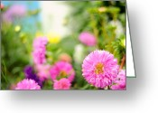 Aster  Photo Greeting Cards - Joy of Summer Time Greeting Card by Jenny Rainbow