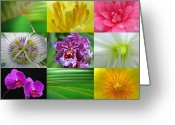 Lily Greeting Cards - Joyful Spring Photography Artwork Collection Greeting Card by Juergen Roth