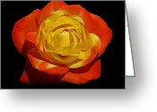 Judy Greeting Cards - Judy Garland Rose Greeting Card by Ernie Echols