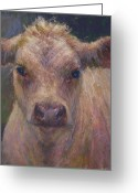 Charolais Greeting Cards - Julius Greeting Card by Susan Williamson