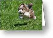 Panting Dog Greeting Cards - Jumping Puppy Greeting Card by @Hans Surfer