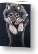 Wolves Drawings Greeting Cards - Jumping Wolf Greeting Card by Lorraine Foster