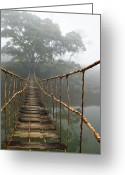 Old Bridge Greeting Cards - Jungle Journey 2 Greeting Card by Skip Nall