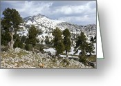 Snow Capped Greeting Cards - Junipers (juniperus Excelsa) Greeting Card by Bob Gibbons