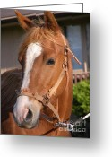 Horse Pyrography Greeting Cards - Just a Face Greeting Card by Yumi Johnson