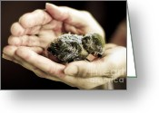 Little Bird Greeting Cards - Just A Little Caring Greeting Card by Syed Aqueel