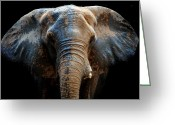 Wildlife Photos Greeting Cards - Just another day at the spa Greeting Card by Skip Willits