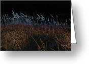 Sea Oats Digital Art Greeting Cards - Just Around Midnight Greeting Card by Suzanne Gaff