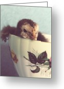 Faux Vintage Greeting Cards - Just Chillin in This Cup Greeting Card by Cassie Peters