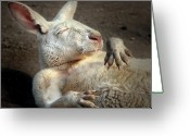 Australian Animal Greeting Cards - Just Chilling Greeting Card by Marion Cullen