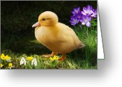Easter Flowers Greeting Cards - Just Ducky Greeting Card by Bob Nolin