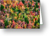 National Forest Greeting Cards - Just in Time Greeting Card by Chad Dutson