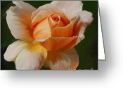 Apricot Painting Greeting Cards - Just Joey Bloom Greeting Card by Diane E Berry