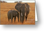 East Africa Greeting Cards - Just Mom and Me Greeting Card by Sandra Bronstein