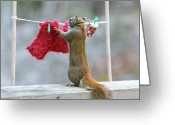 Clothesline Greeting Cards - Just Need One More Clothespin Greeting Card by Nancy Rose