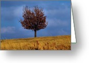 Colorful Photography Greeting Cards - Just One Greeting Card by Karen M Scovill