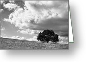 Big Sky Greeting Cards - Just One Tree - Black and White Greeting Card by Peter Tellone