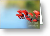 Flower Buds Greeting Cards - Just Red Buds Greeting Card by Kaye Menner